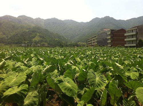 亚热带作物研究所